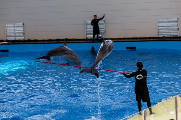 Fakieh Aquarium Jeddah For Kids